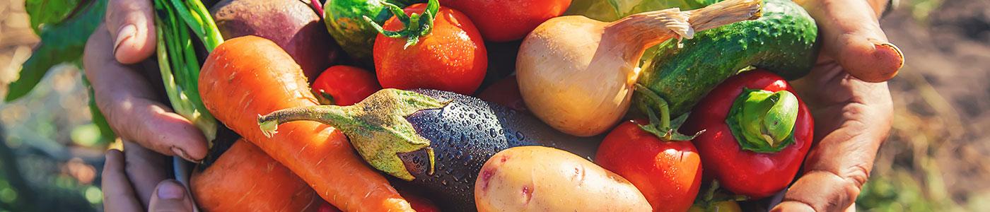 veggies at Landon's greenhouse
